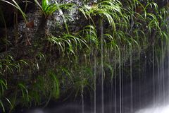 Water in Rainforrest Royalty Free Stock Photo