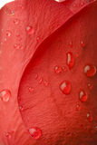 Water on red rose petals Royalty Free Stock Photos