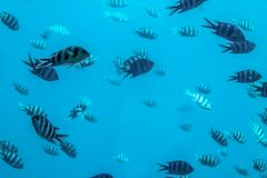 Background transparent water of the red sea and beautiful fish in clear water for diving stock photo