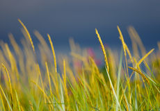 Water reed background Stock Image