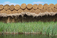 Water reed sheaves Royalty Free Stock Photo