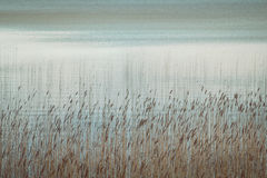 Water and reeds Stock Photography
