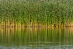 Water and reeds Stock Photos