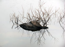 Water reflection. Picture of a rock and branches refelcting in water Stock Images