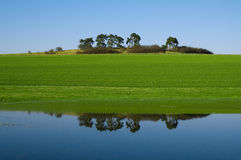 Water reflection. On a field with a group of trees Stock Images