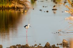 Water, Reflection, Bird, Fauna Royalty Free Stock Images