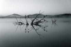 Water, Reflection, Black And White, Nature Royalty Free Stock Photo