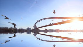 Water reflection bridge landscape birds flying slow motion sunset stock video footage