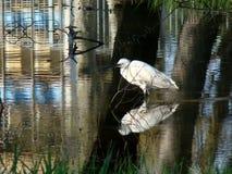 Water, Reflection, Fauna, Bird stock photography