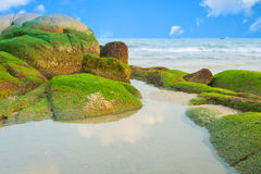 Water reflection and green seaweed on the rocks. Stock Images