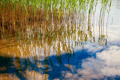 Water Reflection Royalty Free Stock Photos