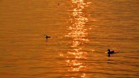 Water, Reflection, Sea, Orange Stock Photos