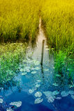 Water reflection of sky, rural West Bengal, India Royalty Free Stock Photos