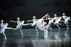 Water reflection-Swan queue-ballet Swan Lake Royalty Free Stock Photos
