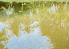 Water reflection of tree Stock Photography