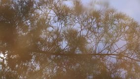 Water reflection of tree branches. Swaying in the wind stock video