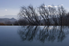 Water reflection of trees Royalty Free Stock Photos