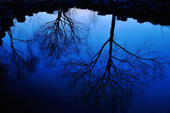 Water Reflection of Trees Stock Photography