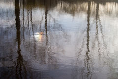 Water Reflection. Trees, sky, clouds and Sun reflecting on Water Stock Photos