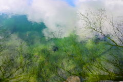 Water. Reflection of trees and sky in the lake with algae Royalty Free Stock Photography