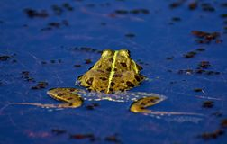 Water, Reflection, Yellow, Leaf Stock Images