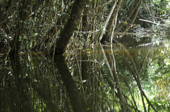 Water reflections. Rainforest flooded by Amazon river Royalty Free Stock Photography