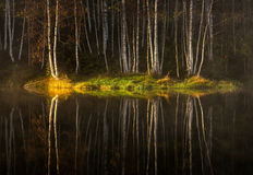 Water reflections of autumn birch Royalty Free Stock Image