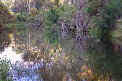 Water Reflections In Creek Cania Gorge Australia. Beautiful water reflections in a small creek in Cania Gorge Queensland Australia stock images