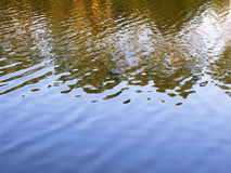 Water reflections. Gold and blue. Autumn Water Reflections. Gold and blue lake royalty free stock image