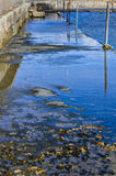 Water reflections - Pontoon royalty free stock images