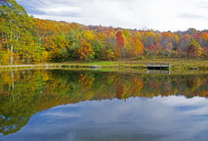 Water reflections in small pond in fall. Royalty Free Stock Image