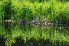 Water reflections in small pond in spring. Stock Images