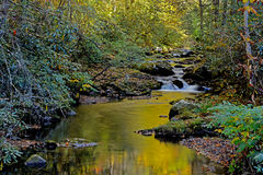 Water reflections in small stream in the Smokies Royalty Free Stock Images