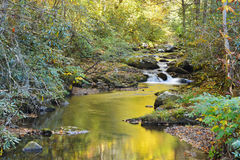 Water reflections in small stream in the Smokies Stock Images