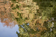Water reflections. Reflections of trees in the pond Stock Images