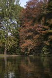 Water reflections. Reflections of trees in the pond Stock Photography