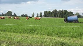 Water reservoir on wheels and cow herd eat grass in rural pasture. 4K stock footage
