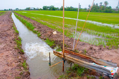 Water for rice field. Royalty Free Stock Images