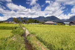 Water for Rice Fields royalty free stock photos