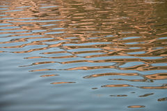 Water ripple texture Royalty Free Stock Images