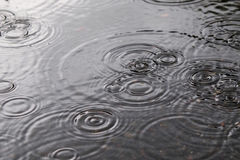 Water ripples. Rainy day, Rain and water ripples Royalty Free Stock Photography
