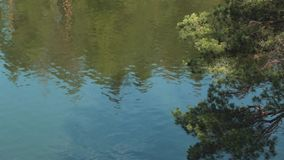 Water ripples on the river. Reflection of trees in beautiful lake stock footage