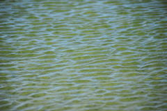 Water Ripples Texture Stock Images