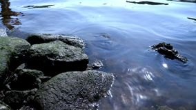 Water river background. Stones and river water waves. Water river background. Close up smooth river water surface. Shiny river water surface. Stones and river stock footage