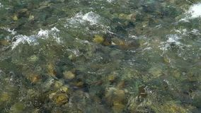 Water river background. close up of stones in pure fresh transparent mountain river water, View from above. Stones can. Water river background. close up of stock video footage