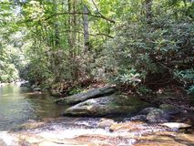 Water river creek mountain clear fish rocks trees flowing fresh royalty free stock images
