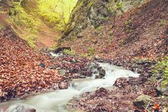 Water river in the forest royalty free stock photography