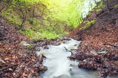 Water river in the forest royalty free stock photo
