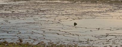 Water rock pattern - low tide on a beach. Wallpaper. Walpaper pattern of water and rock on a beack by low tide Royalty Free Stock Photo