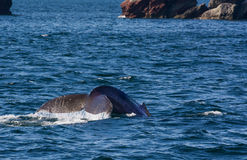Water rolling off whale tail Stock Images